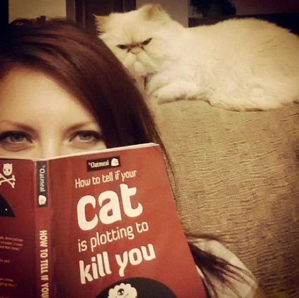 understand and train your cat